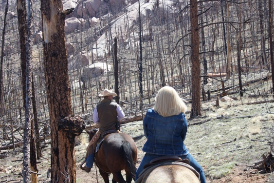 Horseback riding through the Hayman burn area with our guide, Paul... the London cowboy. (May 2013)